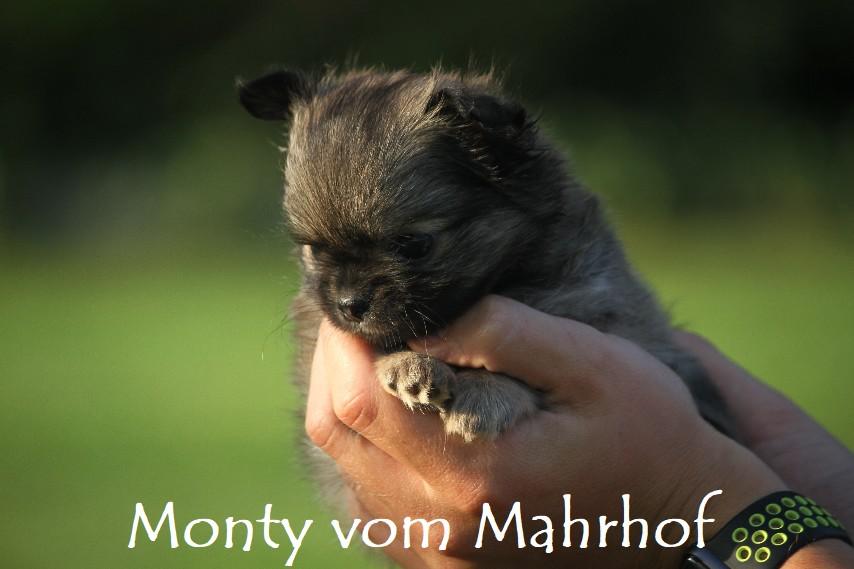 monty_4453__16_.jpg