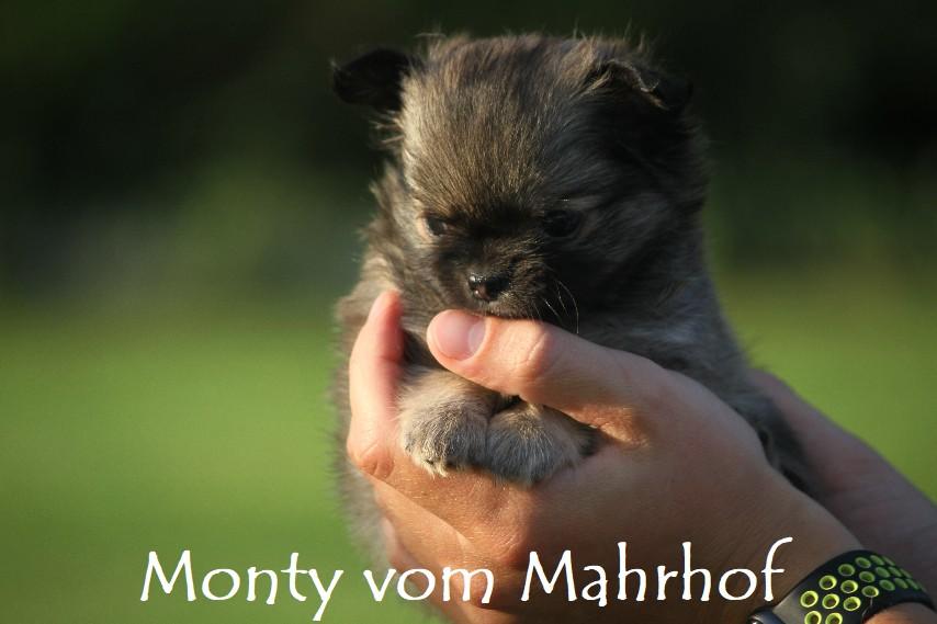 monty_4453__1_.jpg