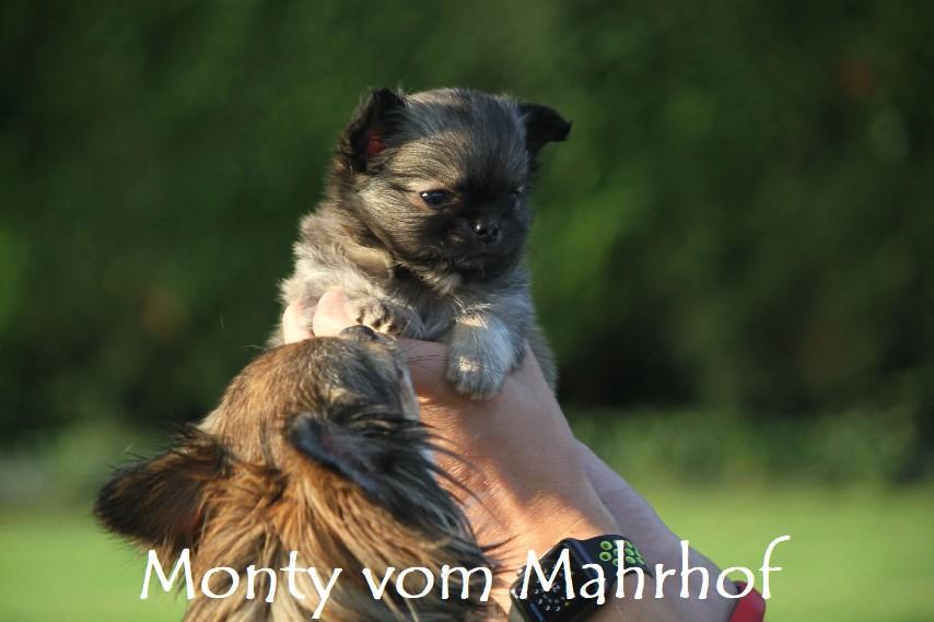 monty_4453__2_.jpg