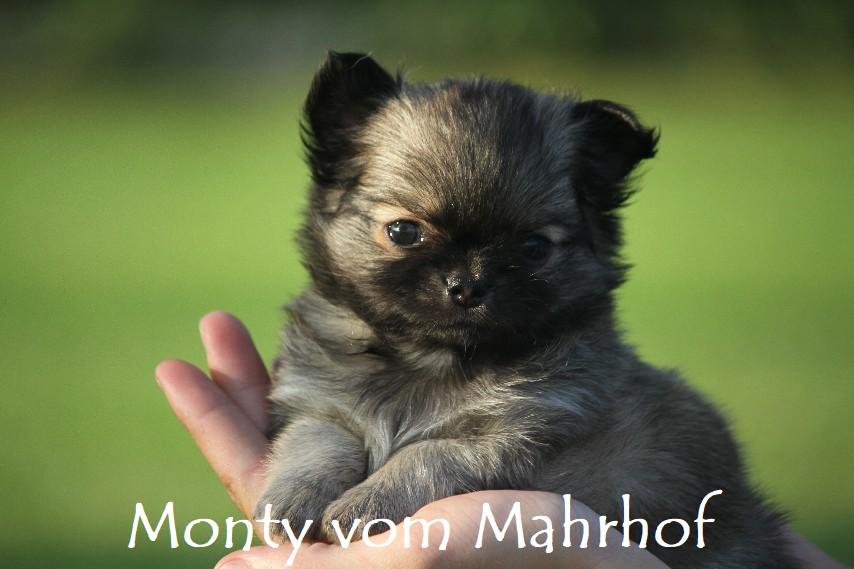 monty_4453__7_.jpg